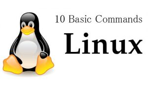 10 basic Linux Commands